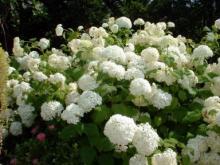 由仁ハーブガーデンの花2