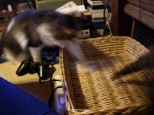猫紙芝居6