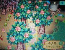 桜祭り02
