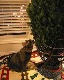 curious cat1