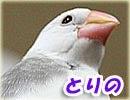 白文鳥ーとりの