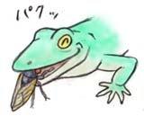 セミ食うトカゲ