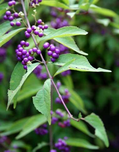 円覚寺の紫式部