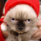 ブルちゃんの「Cat Cafe きまぐれねこ」レポート2の記事より