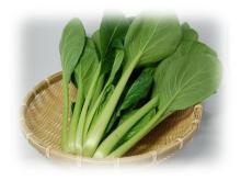 アルベンス小松菜