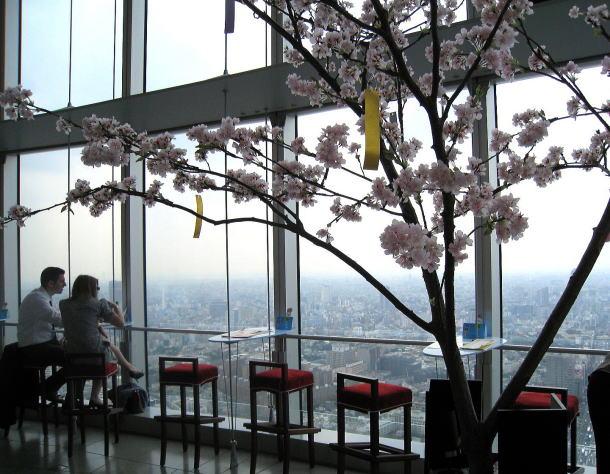 天空の花見カフェ