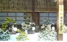 靖国 菊 2007.11.03