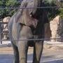 動物園@上野